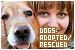 Dogs: Adopted & Rescued: