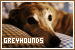 Dogs: Greyhounds: