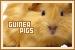 Guinea Pigs: