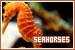 Seahorses: