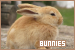 Rabbits & Bunnies: