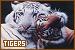 Tigers: