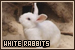 Rabbits: White: