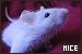 Mice: