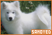 Dogs: Samoyed: