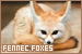 Foxes: Fennec: