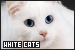 Cats: White: